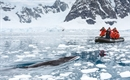 National Geographic Endurance to offer new Antarctica cruises